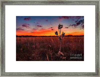 Wildfire Framed Print by Rivers Rudloff