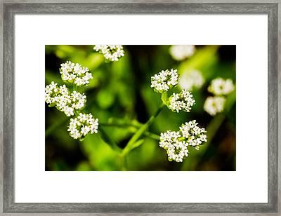 Wildflower - 3 Framed Print by Barry Jones