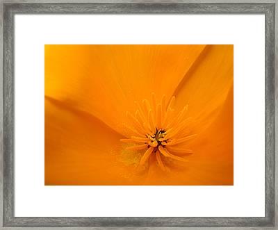 Wildflower Art Poppy Flower 6 Poppies Artwork Prints Cards Framed Print by Baslee Troutman