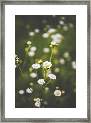 Framed Print featuring the photograph Wildflower Beauty by Shelby Young