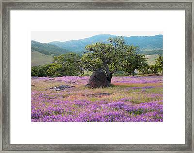 Wildflower Bouquet For Mothers Day Framed Print