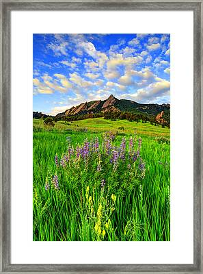 Wildflower Colors Framed Print by Scott Mahon