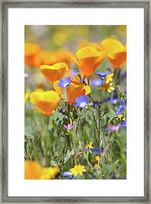 Framed Print featuring the photograph Wildflower Detail by Cliff Wassmann