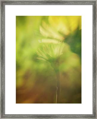 Wildflower..double Exposure Framed Print by Tom Druin
