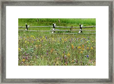 Wildflower Fence Framed Print