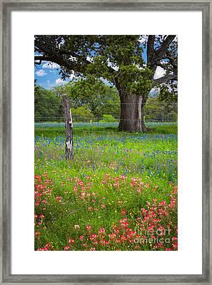 Texas Pastoral Landscape Framed Print by Inge Johnsson