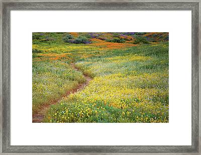 Framed Print featuring the photograph Wildflower Field Near Diamond Lake In California by Jetson Nguyen