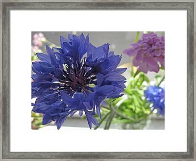 Wildflower Fluff Framed Print by Barbara McDevitt