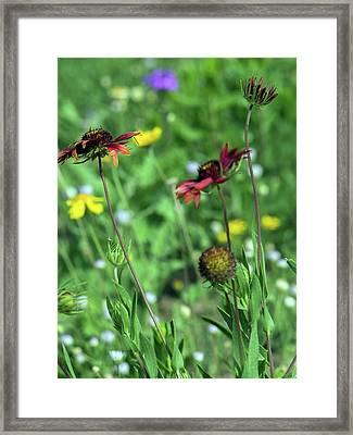 Wildflower Garden 7886 Framed Print by Tam Ryan