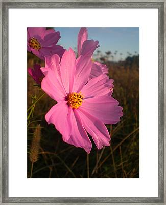 Wildflower Greeting The Day II Framed Print by Wendy Robertson