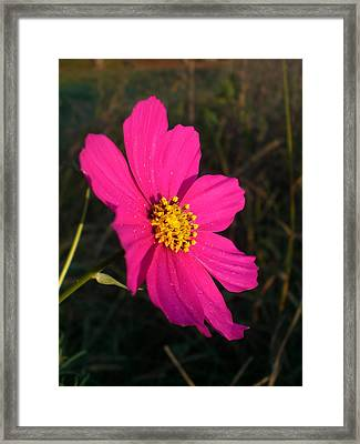 Wildflower Greeting The Day Framed Print by Wendy Robertson
