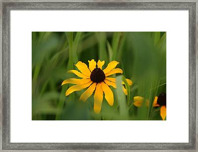 Wildflower Framed Print by Gregory Jeffries