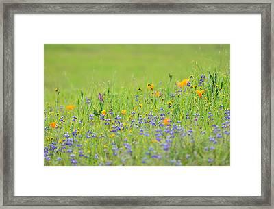 Wildflower Impressions Framed Print by Kathy Yates