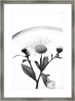Wildflower In A Wine Glass Black And White Framed Print
