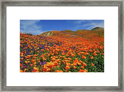 Wildflower Jackpot Framed Print