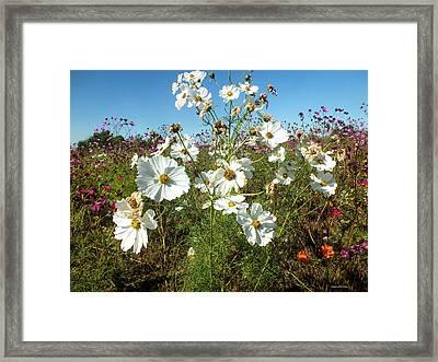 Wildflower Mania Framed Print