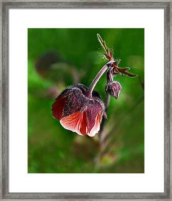 Framed Print featuring the photograph Wildflower by Marilynne Bull