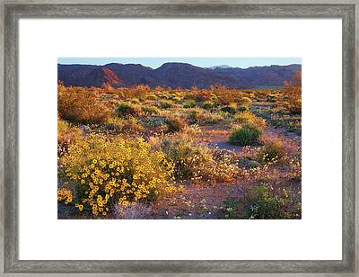 Framed Print featuring the photograph Wildflower Meadow At Joshua Tree National Park by Ram Vasudev