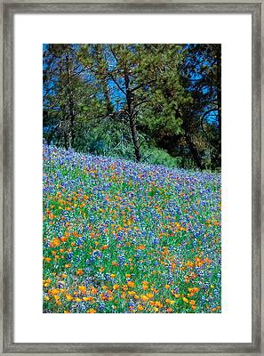 Framed Print featuring the photograph Wildflower Meadow - Figueroa Mountains California by Ram Vasudev