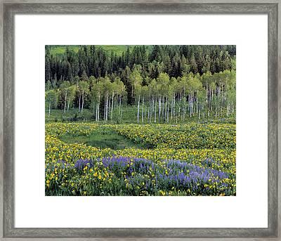 Wildflower Meadow Framed Print by Leland D Howard
