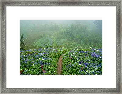 Wildflower Meadow Trail Framed Print by Mike Dawson