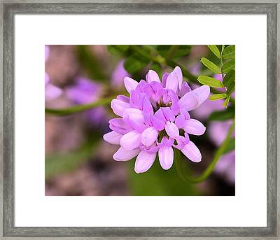 Wildflower Or Weed Framed Print by Kathy Eickenberg