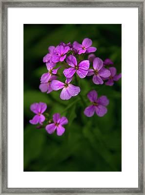 Wildflower Pallette Framed Print by Timothy McIntyre