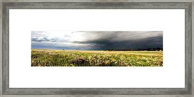 Wildflower Panorama 2008 Framed Print
