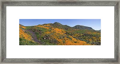 Framed Print featuring the photograph Wildflower Panoramic by Cliff Wassmann