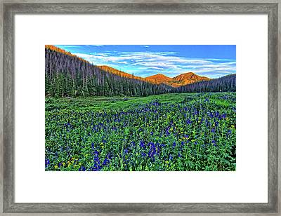 Framed Print featuring the photograph Wildflower Park by Scott Mahon