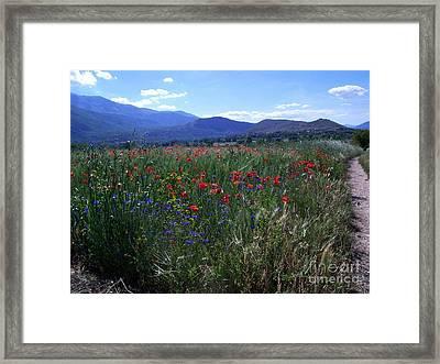 Wildflower Path Framed Print by Judy Kirouac