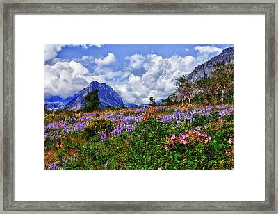 Wildflower Profusion Framed Print by Albert Seger