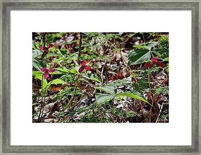 Wildflower Season Framed Print
