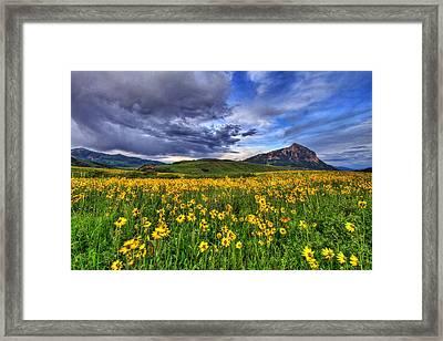 Wildflower Storm Framed Print