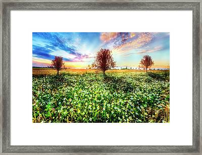 Wildflower Sunset Framed Print