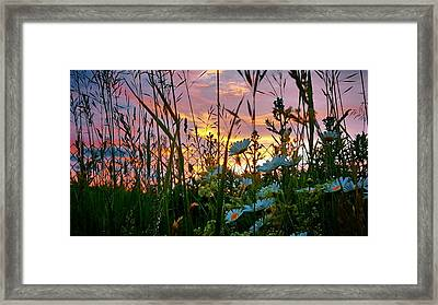 Wildflower Sunset  Framed Print by Jenn Teel