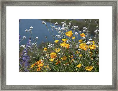Framed Print featuring the photograph Wildflower Super Bloom At Diamond Valley Lake by Cliff Wassmann