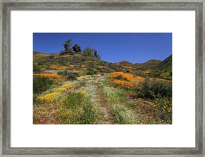 Framed Print featuring the photograph Wildflower Superbloom by Cliff Wassmann