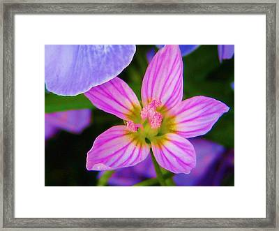Framed Print featuring the photograph Wildflower by Susan Carella