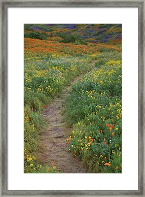 Framed Print featuring the photograph Wildflower Trail At Diamond Lake In California by Jetson Nguyen