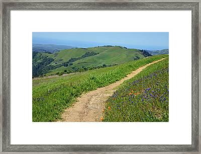 Wildflower Trail Framed Print by Kathy Yates