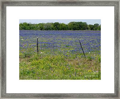 Wildflowers - Blue Horizon Framed Print by Lucyna A M Green