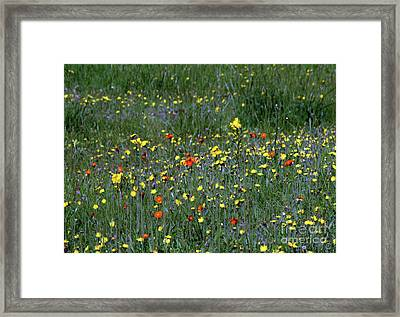 Wildflowers #1 Framed Print