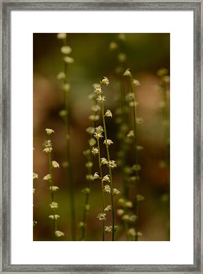 Wildflowers 1 Framed Print by Maria Suhr