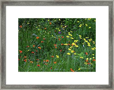 Wildflowers #2 Framed Print
