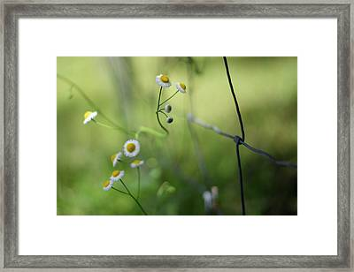 Wildflowers Along A Country Road Framed Print