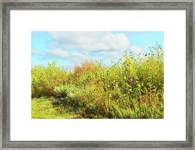 Wildflowers Along A Country Road  Photography  Framed Print by Ann Powell