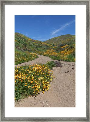 Framed Print featuring the photograph Wildflowers Along Walker Canyone by Cliff Wassmann