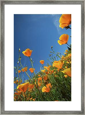 Framed Print featuring the photograph Wildflowers And Blue Sky by Cliff Wassmann