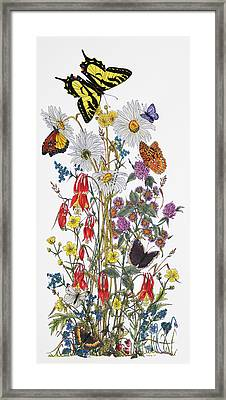 Wildflowers And Butterflies Of The Valley Framed Print